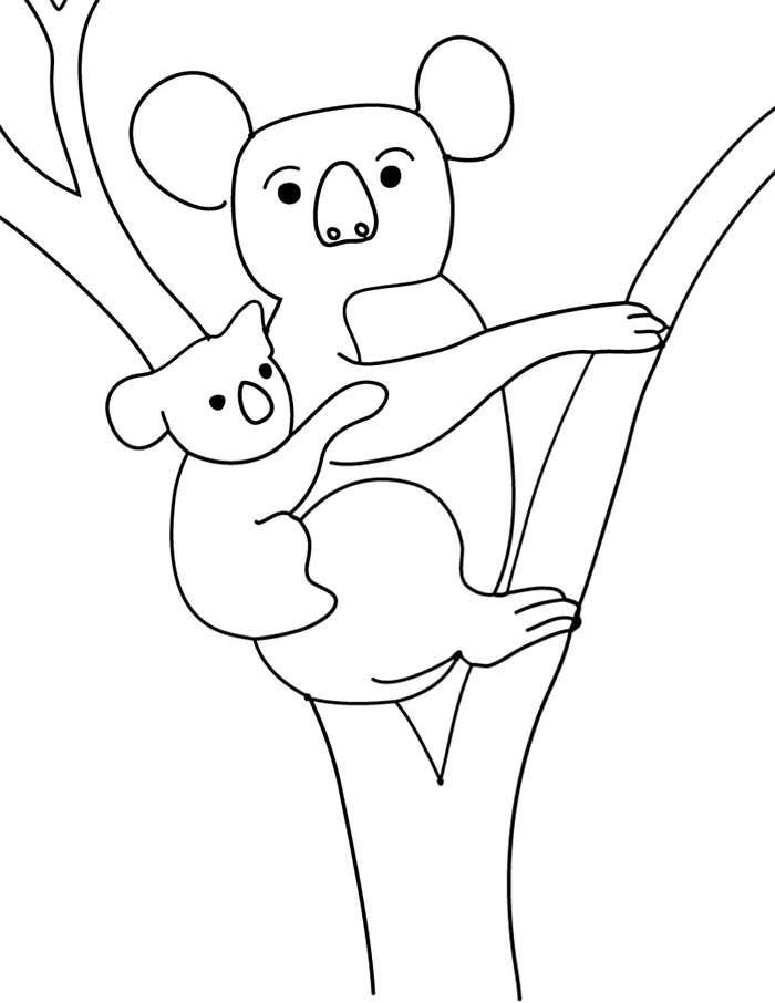 Koala para imprimir e colorir