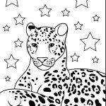 Onça e as estrelas