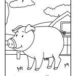 Porco grande para colorir