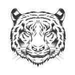 Tigre-asiático